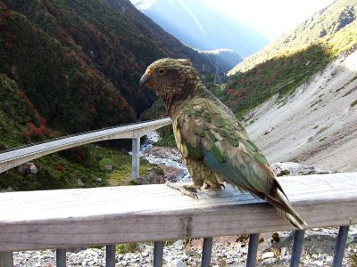 Death's Corner Lookout Kea